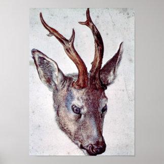 Head of a deer by Albrecht Durer Posters