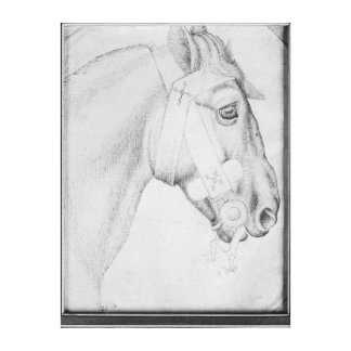 Head of a horse, from the The Vallardi Album Canvas Print