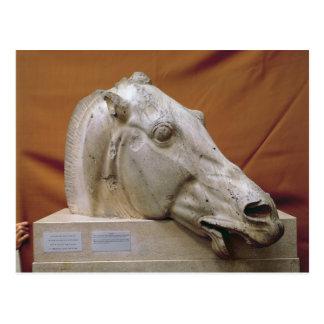 Head of a Horse of Selene Postcard