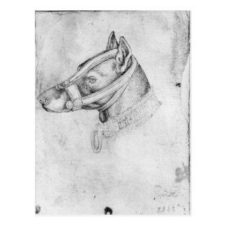 Head of a muzzled dog postcard