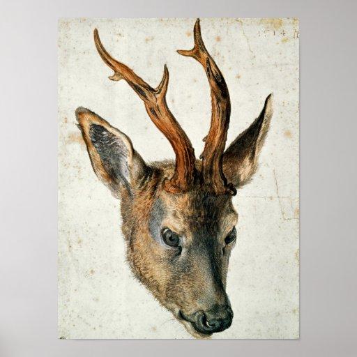 Head of a Roe Deer Print