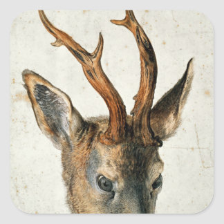 Head of a Roe Deer Square Sticker