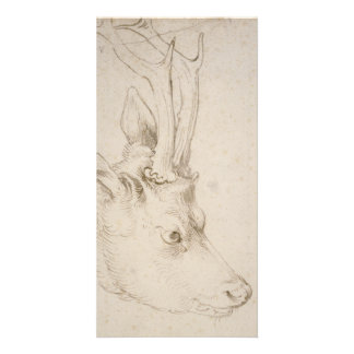 Head of a Roebuck by Albrecht Durer Card