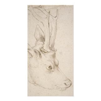 Head of a Roebuck by Albrecht Durer Card