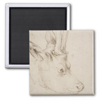 Head of a Roebuck by Albrecht Durer 2 Inch Square Magnet