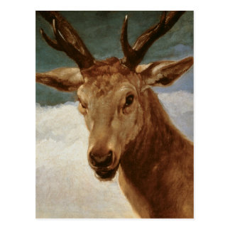 Head of a Stag, 1634 Postcard