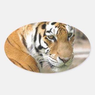 Head of a tiger oval sticker