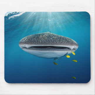 Head of a Whale Shark Mouse Pad