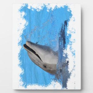 Head of  bottlenose dolphin display plaque