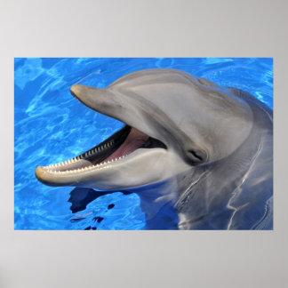 Head of  bottlenose dolphin print