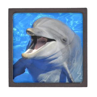 Head of  bottlenose dolphin premium gift boxes
