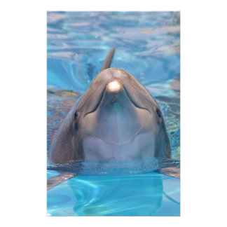 Head of  bottlenose dolphin stationery