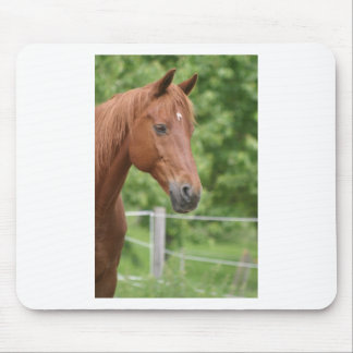 Head of brown horse mouse pad