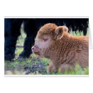 Head of Brown newborn scottish highlander calf Card