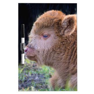 Head of Brown newborn scottish highlander calf Dry Erase Board