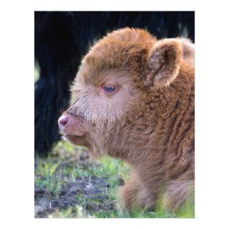 Head of Brown newborn scottish highlander calf Letterhead