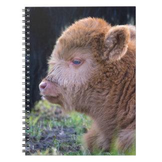 Head of Brown newborn scottish highlander calf Spiral Notebook
