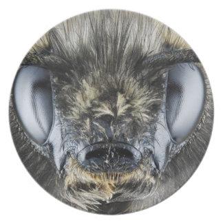 Head of bumblebee dinner plate