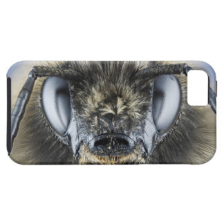 Head of bumblebee iPhone SE/5/5s case