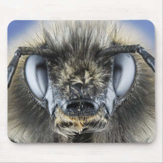 Head of bumblebee mouse pad