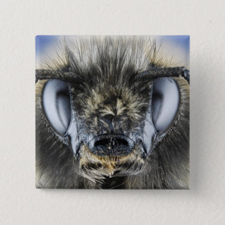 Head of bumblebee pinback button