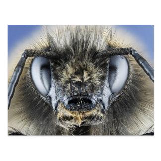 Head of bumblebee postcard