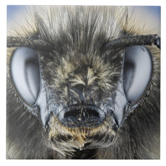 Head of bumblebee tile