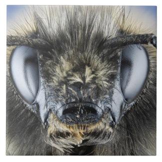Head of bumblebee tile