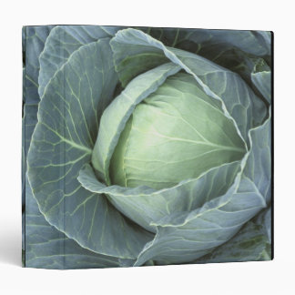 Head of cabbage with drops of water binder