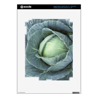 Head of cabbage with drops of water iPad 3 skins