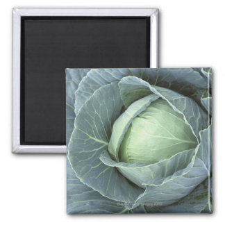 Head of cabbage with drops of water magnet