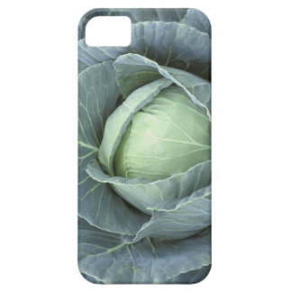 Head of cabbage with drops of water on it, iPhone SE/5/5s case