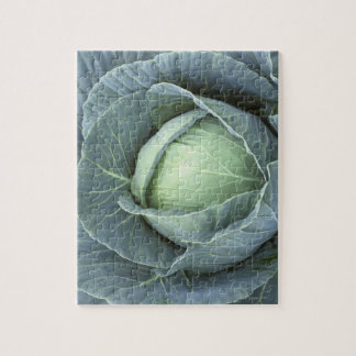 Head of cabbage with drops of water on it, jigsaw puzzle