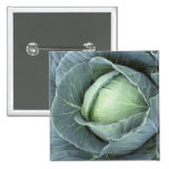 Head of cabbage with drops of water pinback button