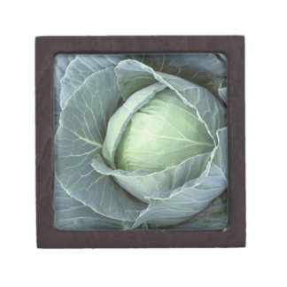 Head of cabbage with drops of water premium jewelry box