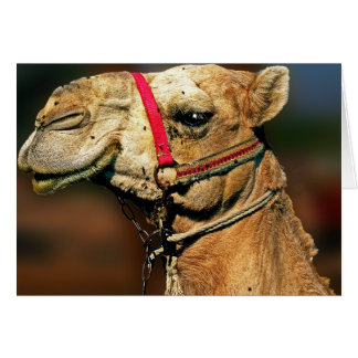 Head of Camel Greeting Card