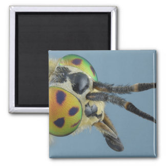 Head of deer fly magnet