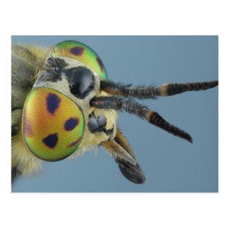 Head of deer fly postcard