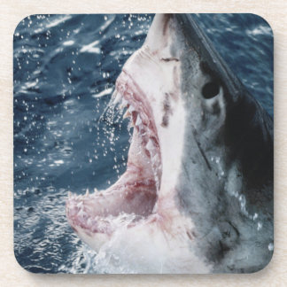 Head of Great White Shark Beverage Coaster