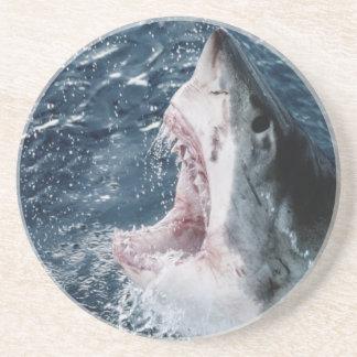 Head of Great White Shark Coaster
