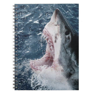 Head of Great White Shark Note Books