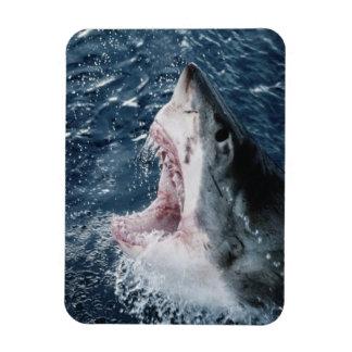 Head of Great White Shark Rectangular Photo Magnet