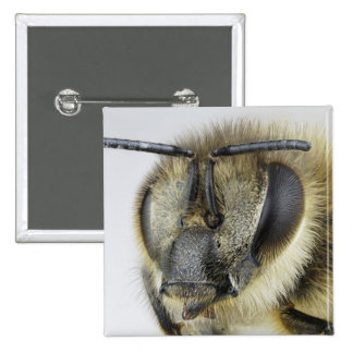 Head of honeybee button