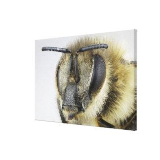 Head of honeybee canvas print