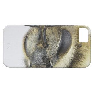 Head of honeybee iPhone 5 cover