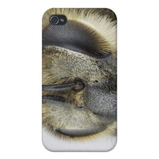 Head of honeybee iPhone 4/4S cases