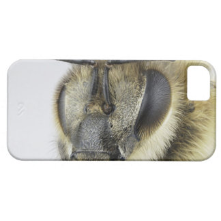 Head of honeybee iPhone SE/5/5s case