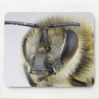 Head of honeybee mouse pad