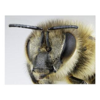Head of honeybee postcard