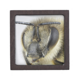 Head of honeybee premium gift boxes
